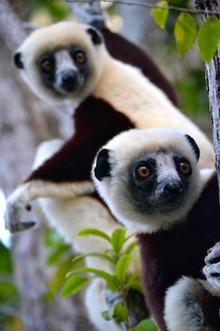 January2018.lemurs